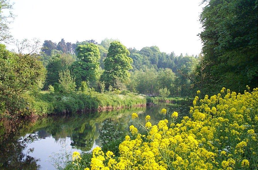 A summer scene along the River Lagan, Belfast